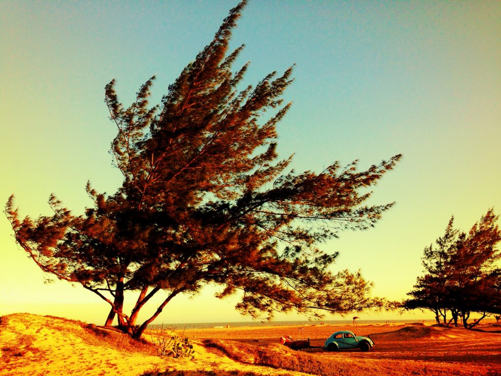 Дерево над автомобилем