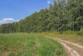 Аренда земельного участка (пая)
